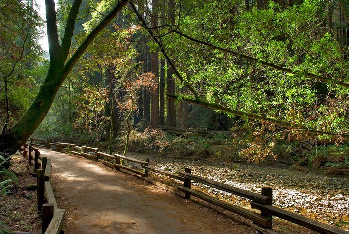 muir woods 2